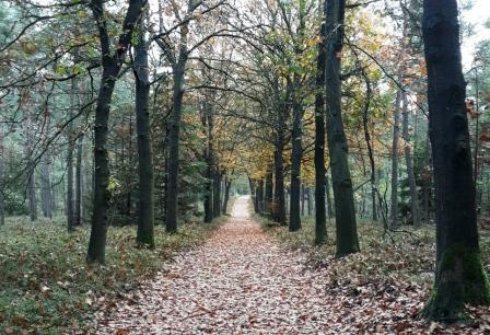 Een lang pad vol met herfstbladeren. Je ziet het niet, maar de nieuwe knoppen zijn er al, dus het is niet wat het lijkt.